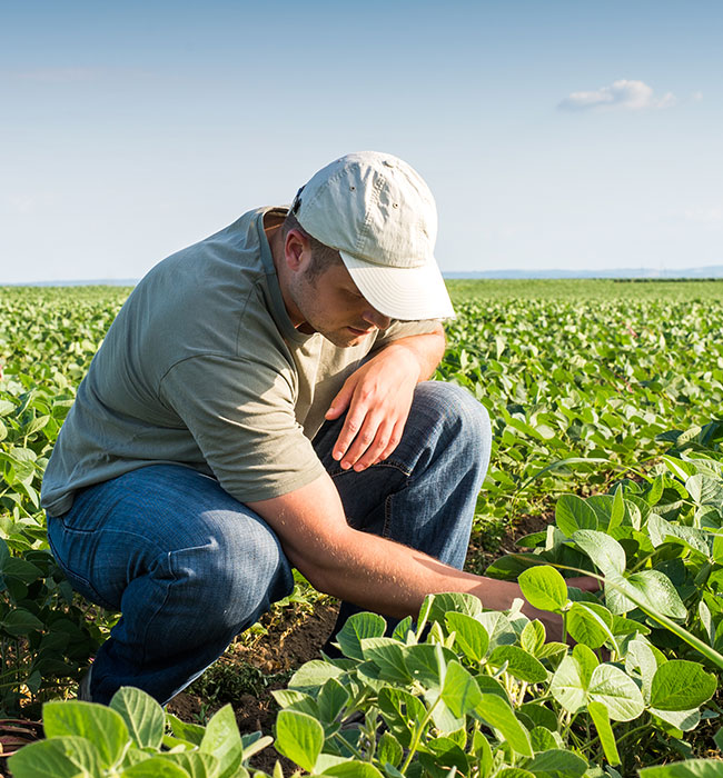 Young farmer in soybean fields